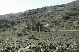 fontanacota